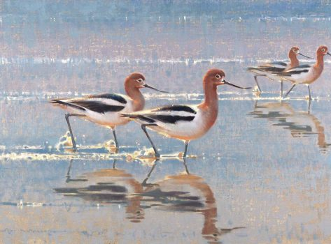 american-avocets-20x30-oil-on-linen-jim-morgan