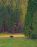 Among The Giants - Sequoias / Amy Sidrane / 40.00x32.00 / $14400.00/ Sold