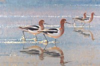 American Avocets / Jim Morgan / 20.00x30.00 / $13500.00